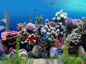 Animated Wallpaper and Desktop Backgrounds Aquarium Animation Wallpaper