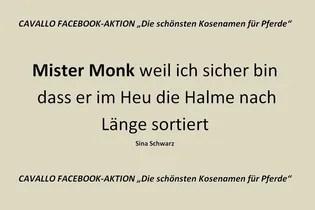 Cavallo Facebook Aktion Die Schonsten Kosenamen Fur Pferde