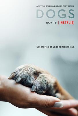 爱犬情深 第二季