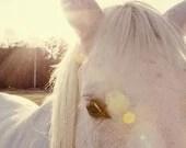 horse photography - fine art horse photograph, white horse, farm decor, animal nursery decor, sunflare, yellow decor - A Horses Eyes - eireanneilis