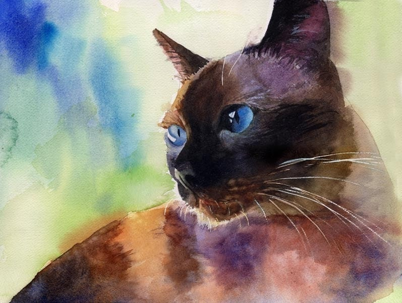 Traditional Applehead Siamese Cat Art Print Of My Watercolor