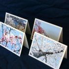 Cherry Blossom Notecards, Set of 8 Pink Blue White Lilac Tree Spring Washington DC