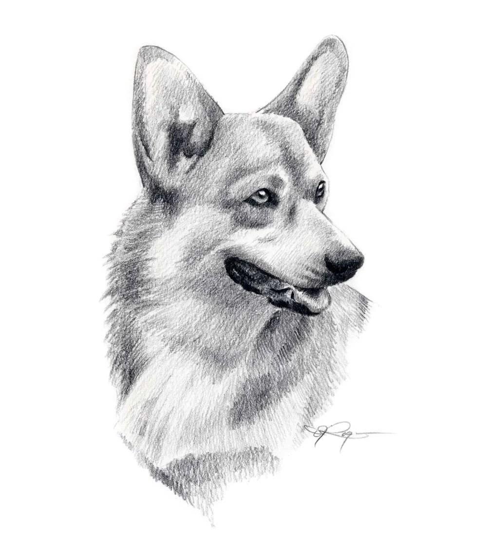 WELSH CORGI Dog Pencil Drawing Art Print Signed By Artist DJ