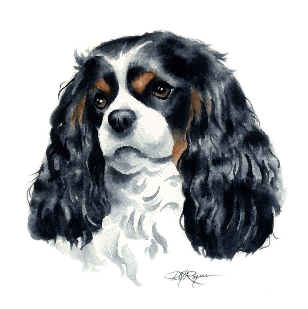 CAVALIER KING CHARLES Spaniel Dog Art Print Signed By Artist D