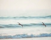 Beach Photograph- Pelicans Riding The Blue Ocean Waves, Bird Photo,  Nautical Beach Photography-Fine Art Photography Home Print - Maddenphotography