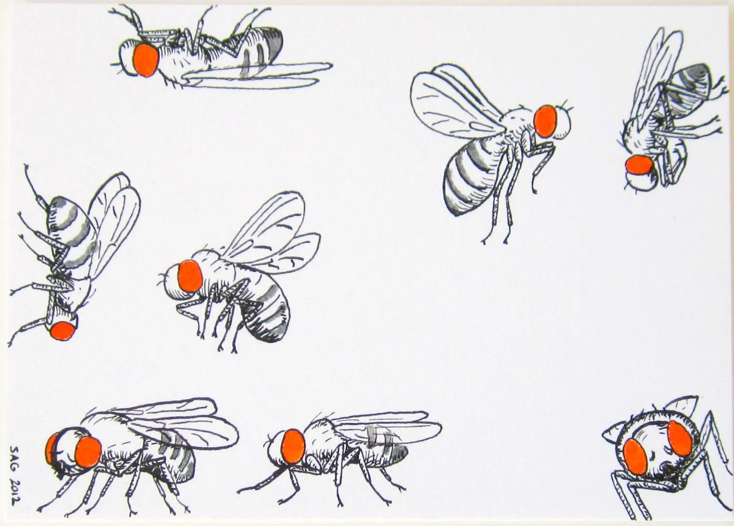 Aceo Drosophila Go About Their Business Archival Print