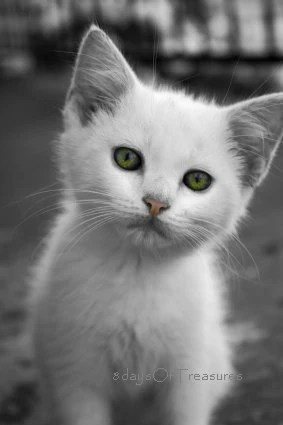 Cat, White, Emerald, Kitten, Dark,  Winter, Nursery Decor, Black, White, Cat lover, Green Eyes, Pink, 8x10 Print - 8daysOfTreasures