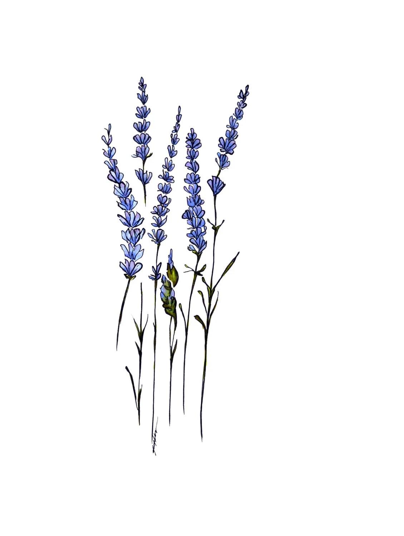 Lavender 4x6 Print