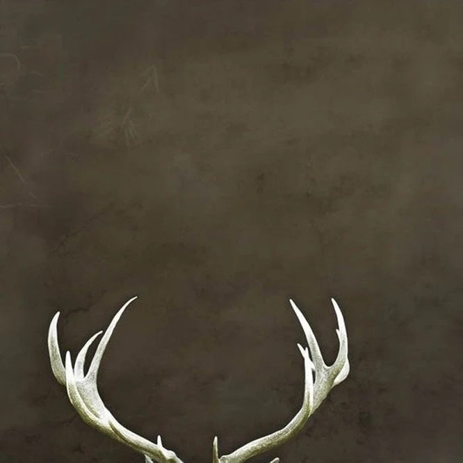 Antlers, rustic photography, Antler wall decor, for men, rich brown, nature, cool gifts for men, folk - Raceytay