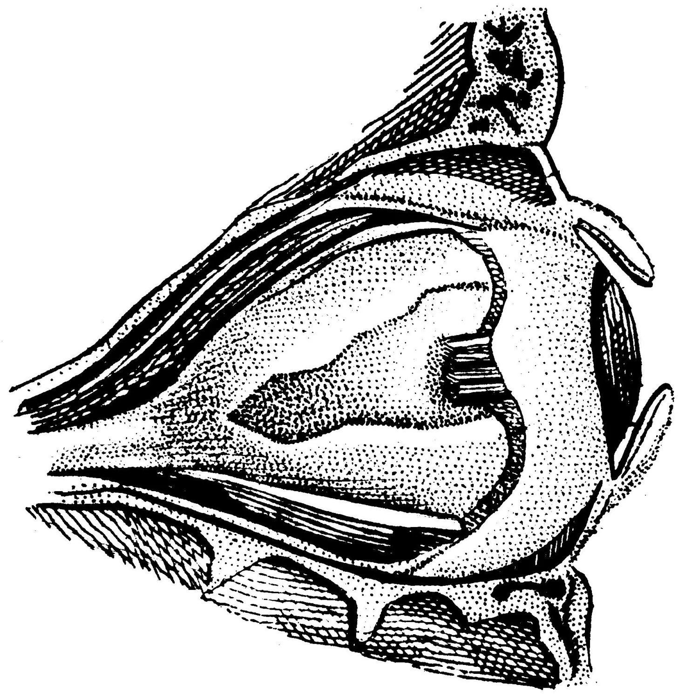 Eye Medical Illustration
