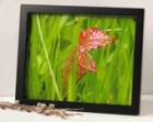 nature photography, wetlands photographs, pitcher plant, 3 sizes available