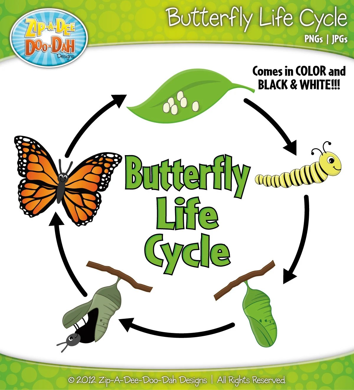 Butterfly Life Cycle Clipart Set Includes By