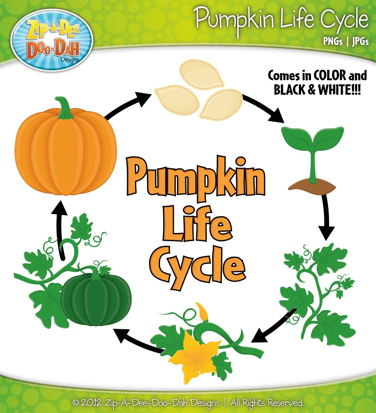 Pumpkin Life Cycle Clipart Set Includes 22 By