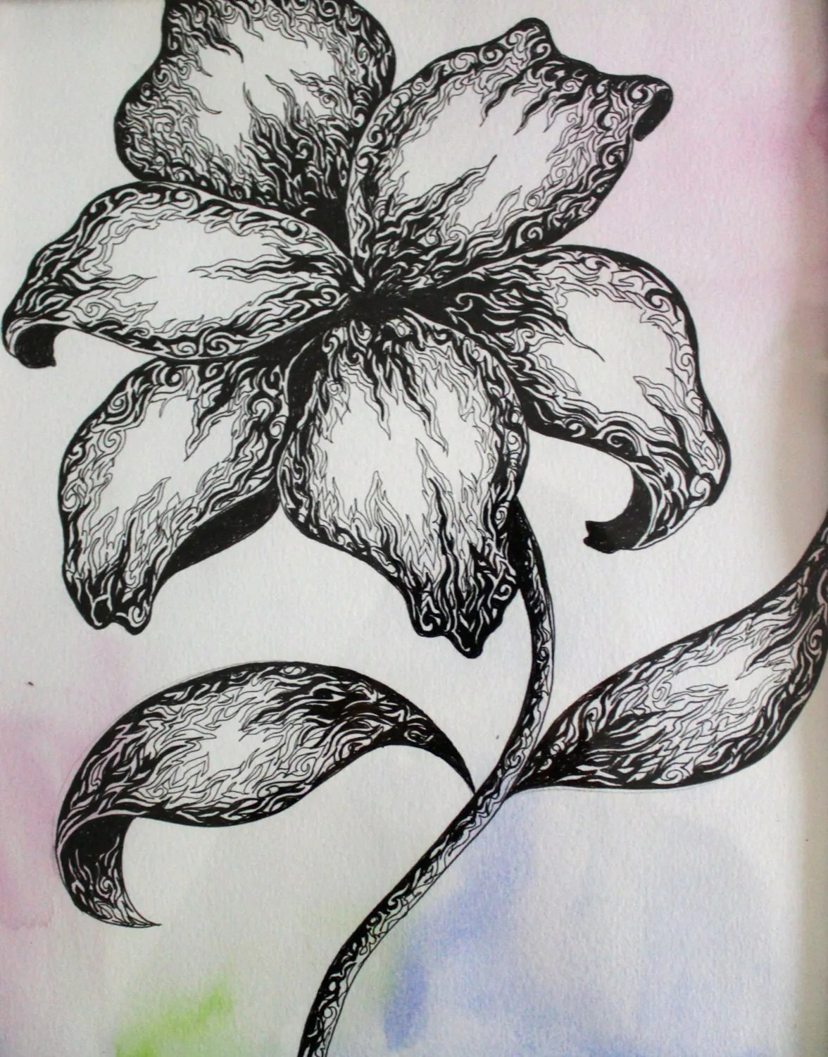 Pen And Ink Flower Drawing Over Acrylic On Paper Framed