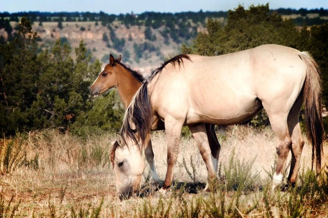 Mother and Child Horse Photography Print, Fine Art Photograph, Wildlife Decor, Nature Photo, Wild Horses, Mustang, Sandy Dune, Brown - TheShutterbugEye