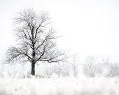 Winter Photo, Single Tree, Snowy Scene, Ice Storm, Winter Beauty