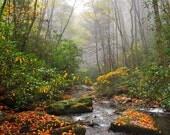 River Mist, Fall Colors, ...