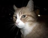 Scrapper cat desktop comp...