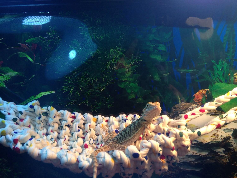 Knitted Lizard Reptile Hammock