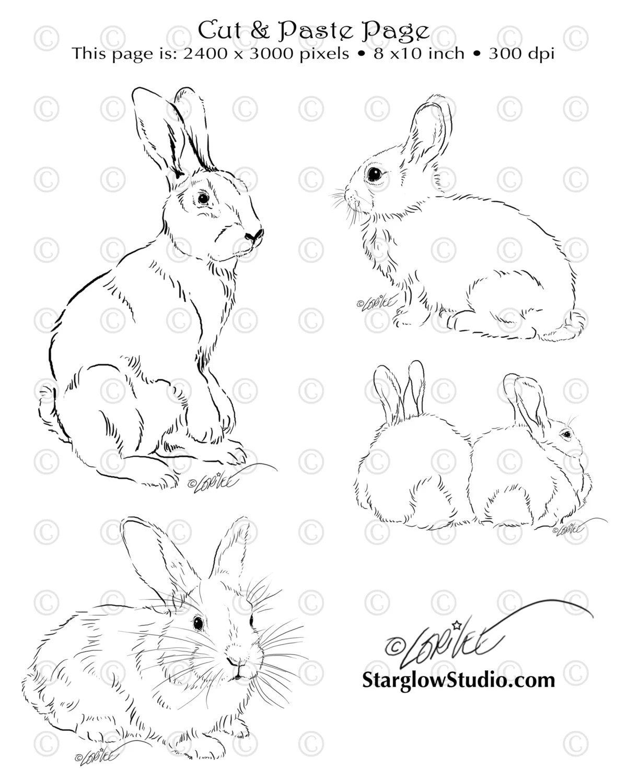 4 Bunny Rabbit Drawings
