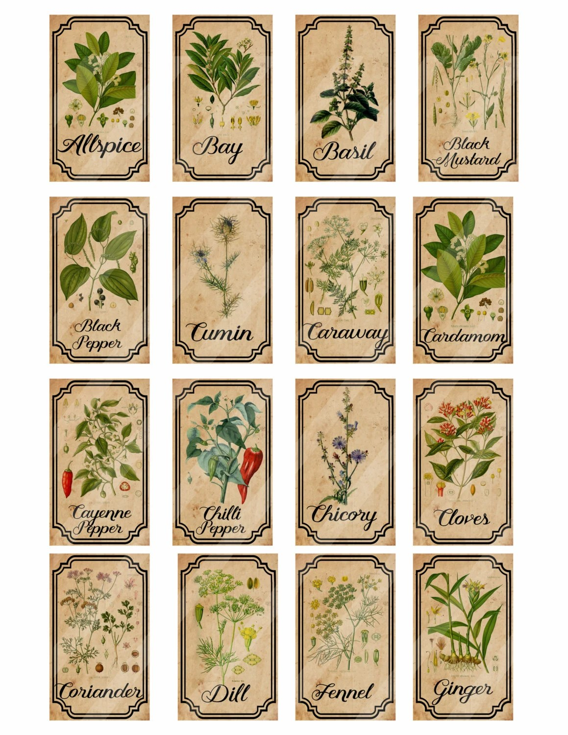 Herb And Spice Apothecary Labels Digital Printable Vintage