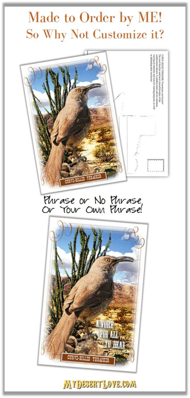 Desert Bird Photo Curve-b...