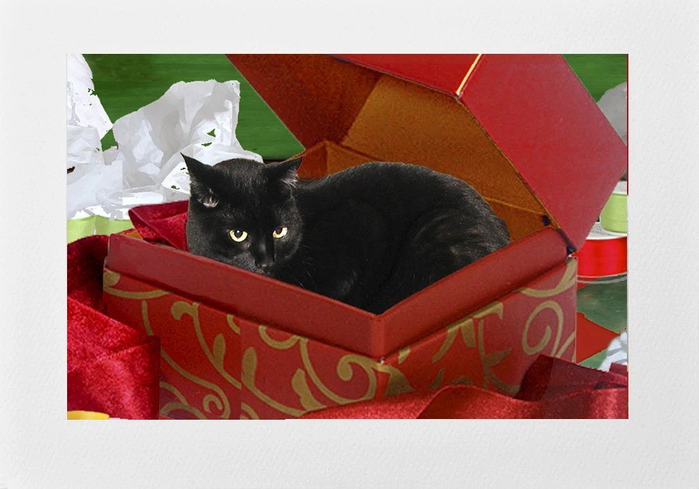 Handmade Black Cat In A Box Christmas Cards Set Of 5 Cat
