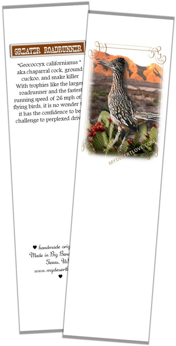 Greater Roadrunner Bird P...