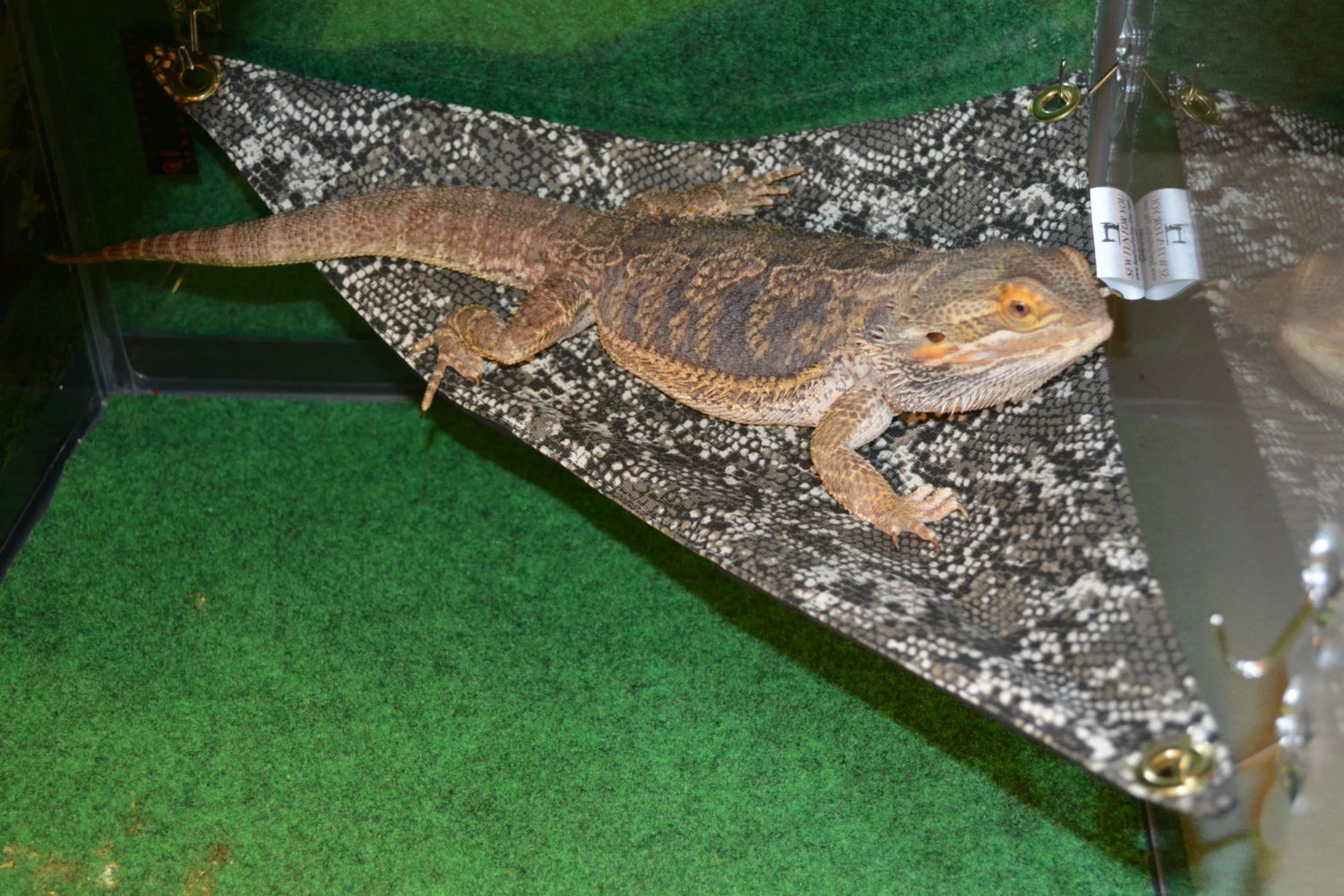 Bearded Dragon Hammock 15x15x21 Lounge Bed Larger Size