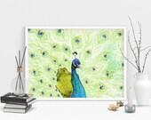 Peacock Art Print - Alcoh...