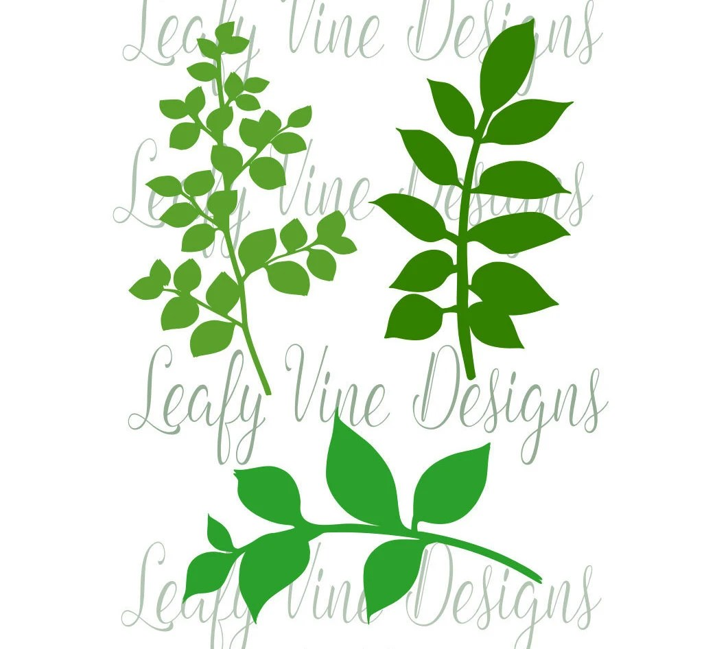 Leaf Svg Template Leafy Vine Set Svg Cut Files Vine Cut Files Leaf Svg Use With Giant Or