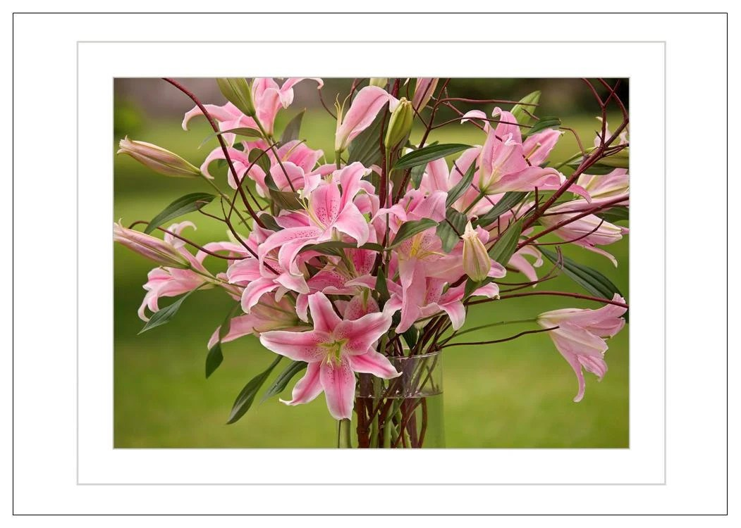 Lilies - Pink and Pretty