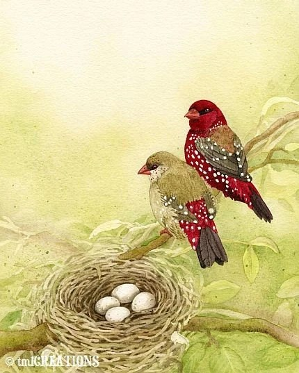 The Finch Family - 8x10 archival watercolor print by Tracy Lizotte