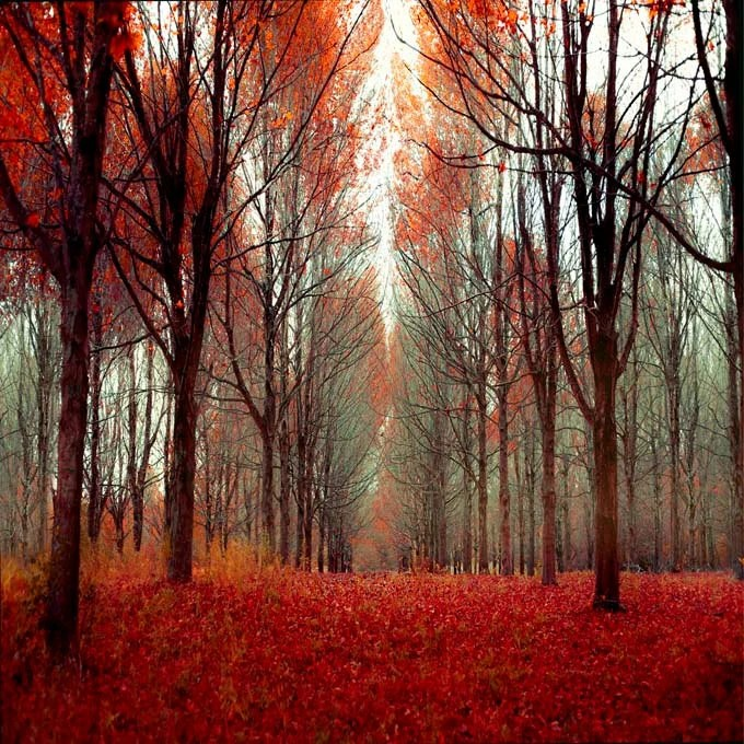 Rich red and orange maple tree forest photo from Ontario Canada