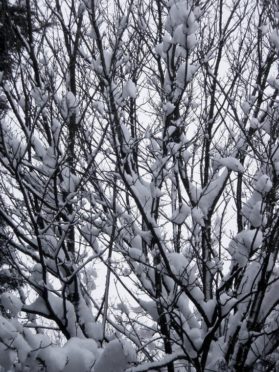 Winter, downloadable photograph, dual pack
