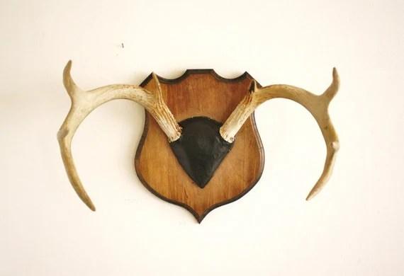 Vintage deer antlers mounted on a solid wood plaque