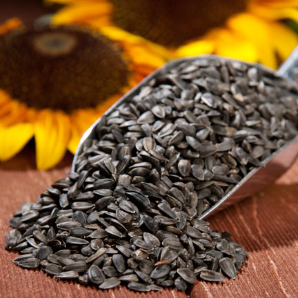 Boss for Chickens or Black Oil Sunflower Seeds-Amazing Huge Advantages to Feed Chickens in 2021