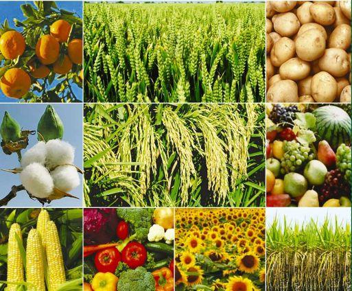 https://i2.wp.com/img1.exportersindia.com/product_images/bc-full/dir_35/1024438/bio-fertilizers-1681389.jpg