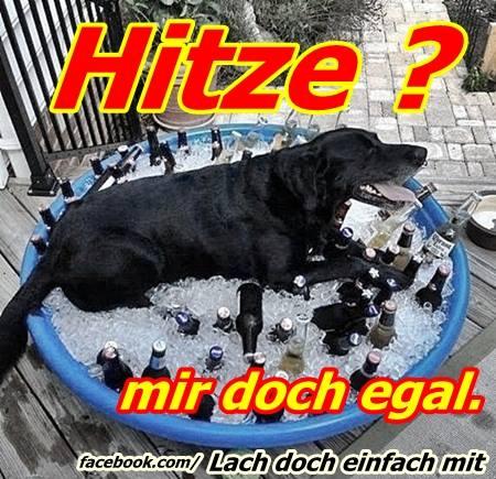 Hunde Und Katzen Bei Hitze