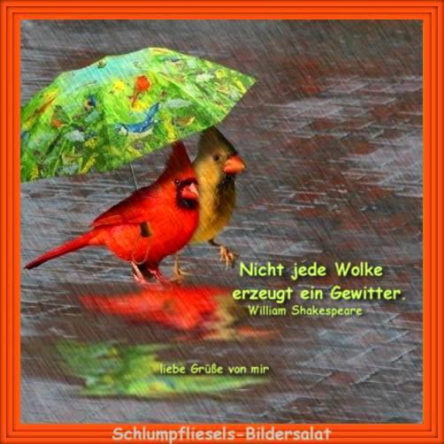 Regen Lustige Bilder Lustige Bilder Spruche Regen