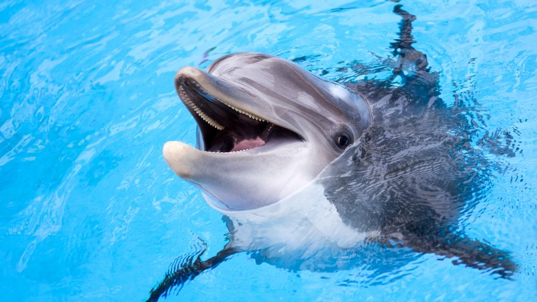 False Facts About Dolphins You Always Believed