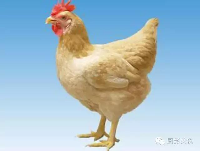 全世界的雞都全了 - 愛經驗