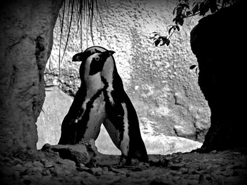 Черно белые фотографии диких животных