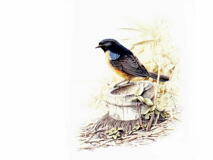 Несколько картинок с птицами (почти медальоны)