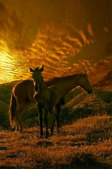 Волшебные красивые фотографии лошадей!