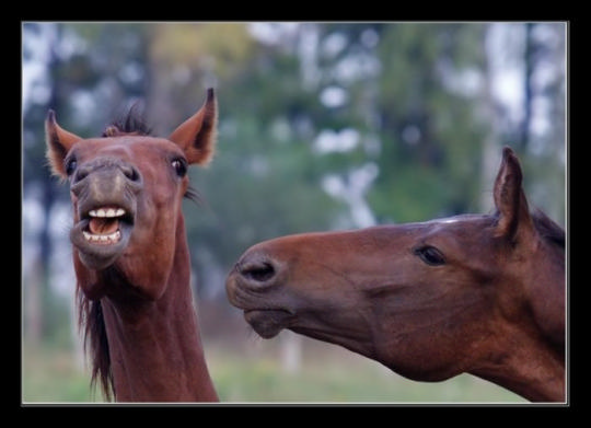 Чудные фотографии лошадок: «Крылатые кони, огромные птицы...»