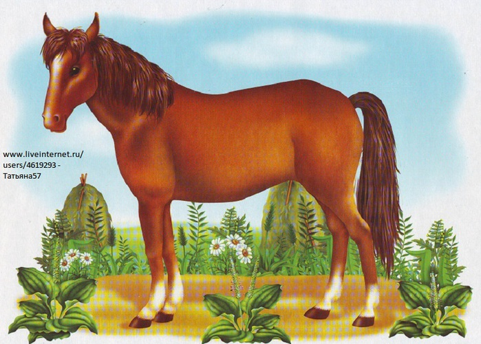 Картинки лошадки для детей детского сада