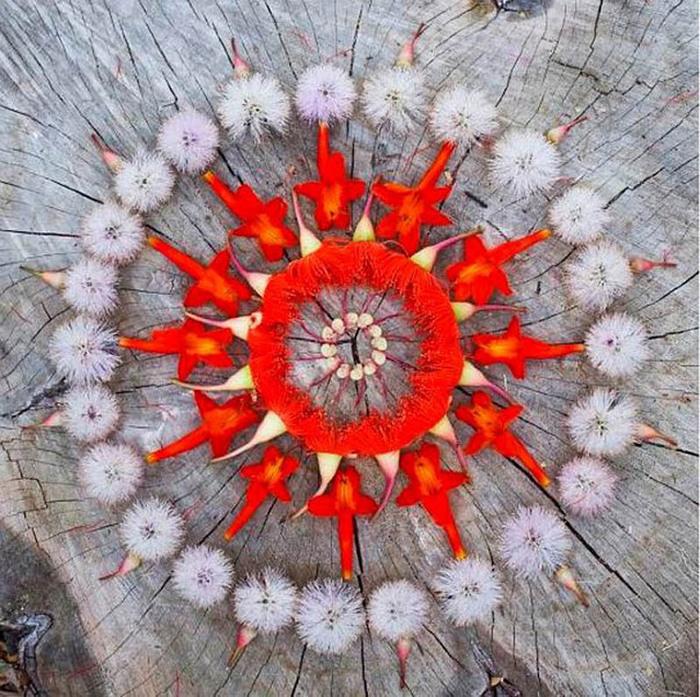 цветочные мандалы фото 26 (700x697, 224Kb)