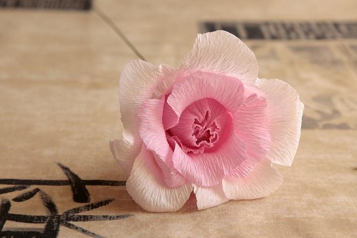розы из гофрированной бумаги. мастер-класс (20) (699x466, 77Kb)