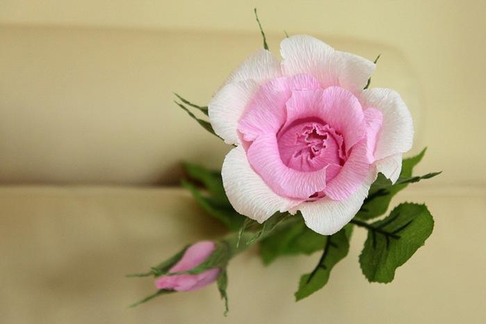 розы из гофрированной бумаги. мастер-класс (34) (699x466, 60Kb)